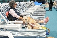 Even guide dogs can relax by the pool.