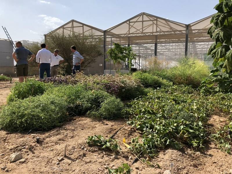 Sustainable Farming in Jordan